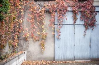 leaves cascading